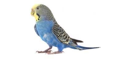 Vogel/Wildvögel/Igel/Hühner