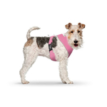 CURLI Brustgeschirr Plush Basic AIR-MESH pink für Hunde M...