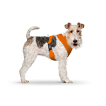 CURLI Brustgeschirr Plush Basic AIR-MESH orange für Hunde...